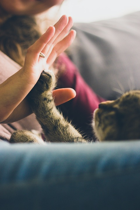 Cat and human high five